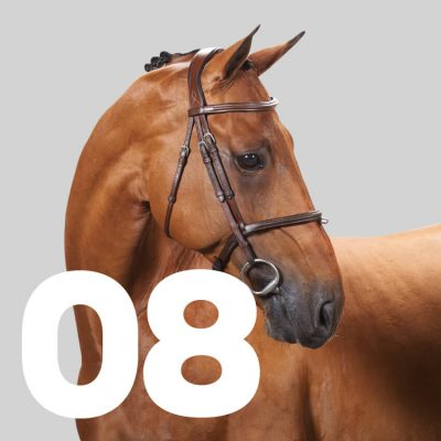 Number 8: Marquis Le Beau Courally
