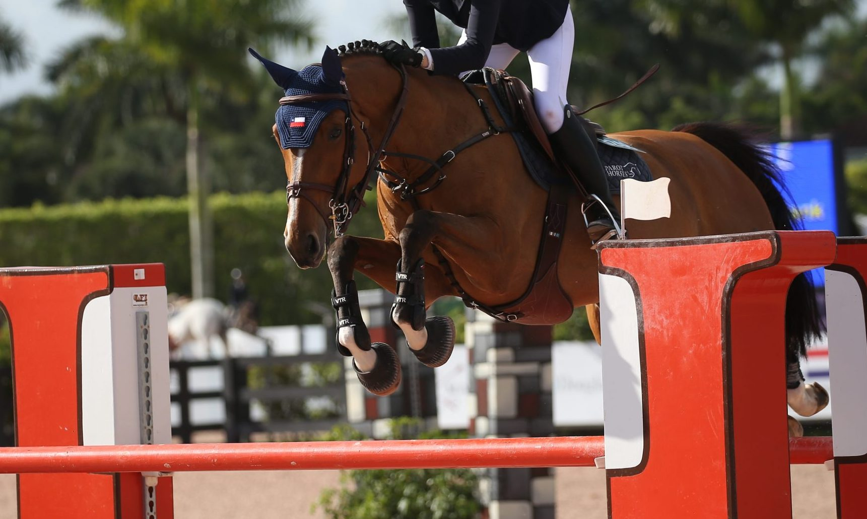 3rd place for Bahira S in the 1.35m Jumper class at Silver Oak Tournament