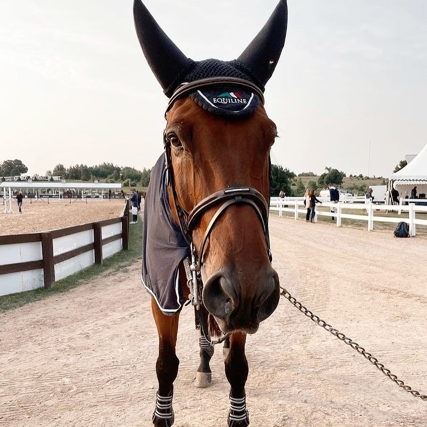 Massimo clear in his first 5* 1.50m class at the American Gold Cup!