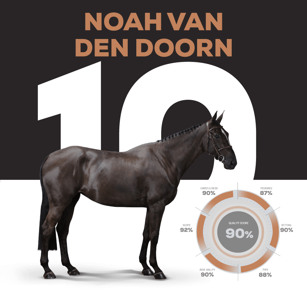 NOAH VAN DEN DOORN : Catalogue Number 10